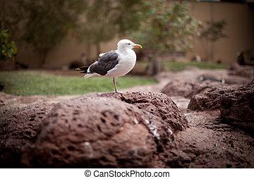 uccello, fornito gambe, uno