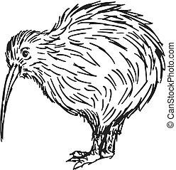 uccello kiwi