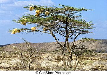 uccello, nidi, su, uno, albero