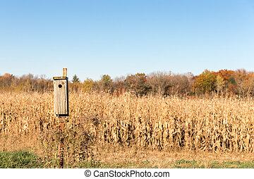 uccello, primo piano, casa, fondo, rurale
