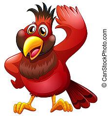uccello, rosso