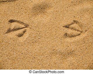 uccello, stampe, sabbia spiaggia, bagnato