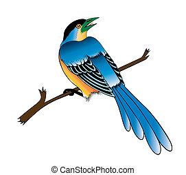 uccello, su, il, sfondo bianco