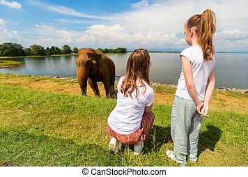 udawalawe, parc national, famille