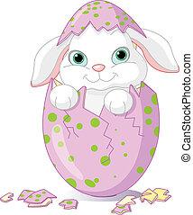 udklækk, baby, påske, æn, bunny