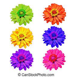 udvælgelse, i, adskillige, blomster, isoleret, på hvide, baggrund.
