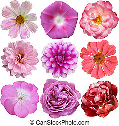 udvælgelse, i, adskillige, blomster, isoleret, på hvide, baggrund