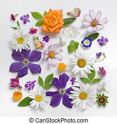 udvælgelse, i, adskillige, blomster, isoleret