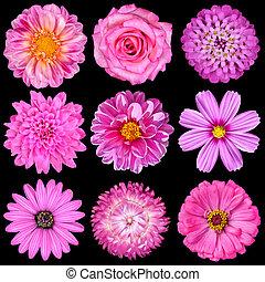 udvælgelse, i, lyserød, hvid blomstrer, isoleret, på, sort