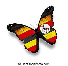 Uganda flag butterfly, isolated on white