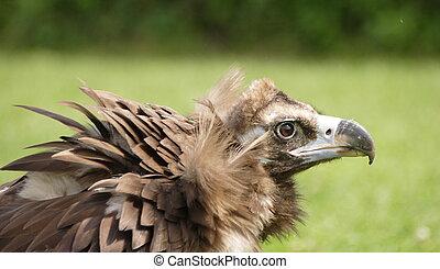 Ugly bird portrait