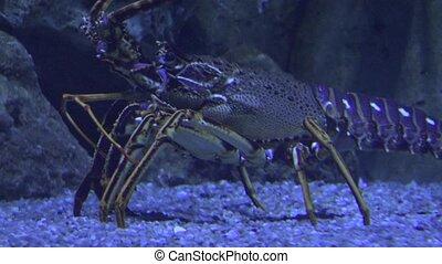 Ugly Marine Life Undersea