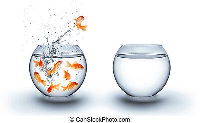 ugrás, víz, ki, aranyhal