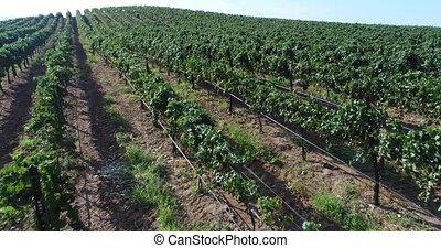UHD 4k Aerial of Country Grape Vineyard Farm.