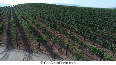 UHD 4k Aerial of Country Grape Vineyard Farm.