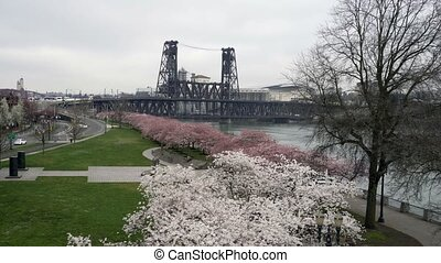 UHD movie of downtown Portland Oregon with Cherry Blossom...