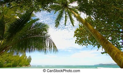 Tropical vegetation on the beach. Palms and trees. Thailand, Phuket Island
