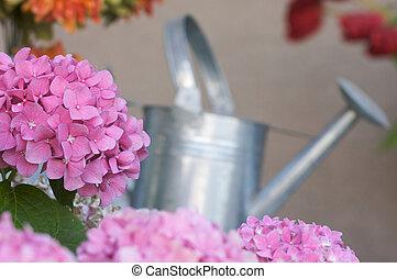 uhyre, hydrangea, blomster
