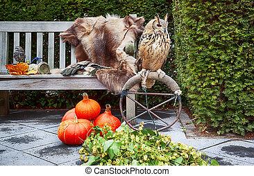 uil, in, herfst, tuin