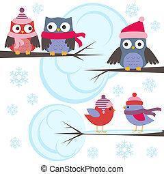 uilen, en, vogels, in, winter, bos
