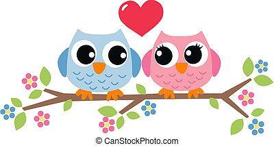 uilen, liefde, twee