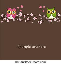 uilen, liefde, twee, gekke