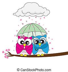 uilen, verliefd