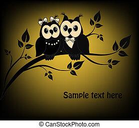 uilen, witte , black , twee