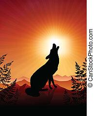 uive, lobo, pôr do sol, fundo