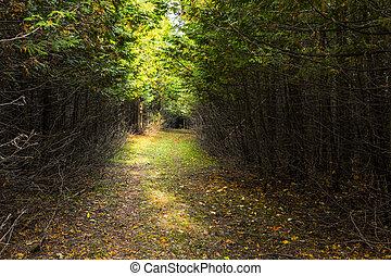ukrýtý, les, cesta