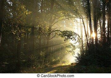 ukrýt v lese přenosová cesta, v, východ slunce