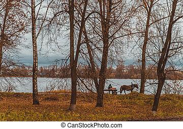 ukraina, river., dnepr