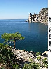 The Black Sea. Pine tree next to the azure sea