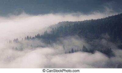 ukraine, montagnes, brouillard, commencement matin