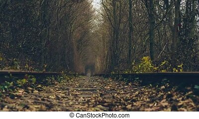 Ukraine, tunnel of love. Timelaps