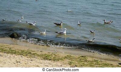ukraine, vagues, flotteur, mouettes, mer noire
