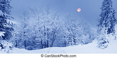 Ukrainian Carpathians snowy forest in the afternoon, and at ...
