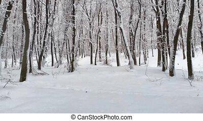 ukrainien, paisible, crée, frais, chute neige, winterscape, forêt