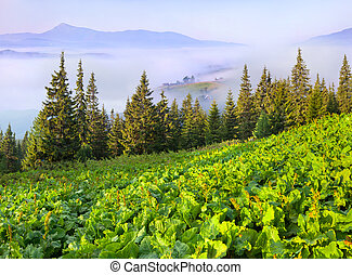 ukrtaine, zomer, berg panorama, carpathian, mist., dorp, europe.