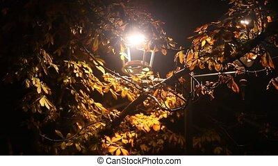 ulica, noc, drzewo, kasztan, park, lampa