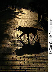 ulice, silueta, pes, sunset.