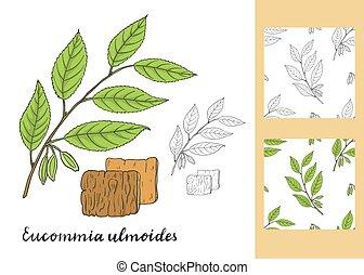 ulmoides, állhatatos, (hardy, patterns., seamless, gumi, eucommia, tree)