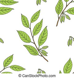 ulmoides, motívum, (hardy, seamless, gumi, eucommia, tree).