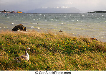 Ultima Esperanza Sound - Puerto Natales Chile - puerto...