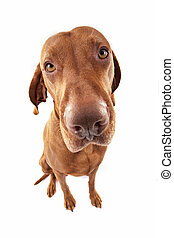 ultra wide angle dog portrait