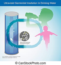 Ultraviolet Germicidal Irradiation In Drinking Water. Illustration explain Ultraviolet Light (UV-C) light this is can kill membrane of bacteria and germ, which is used in the production of drinking water it have suitable for all ages, especially children.