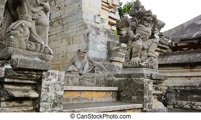 uluwatu, temple, singes, bali
