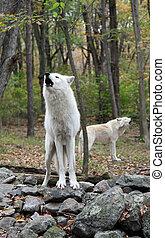 ulv, suse