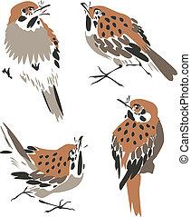 umělecký, ptáček, ilustrace