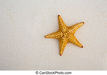 umění, překrásný, summer prázdniny, moře, grafické pozadí